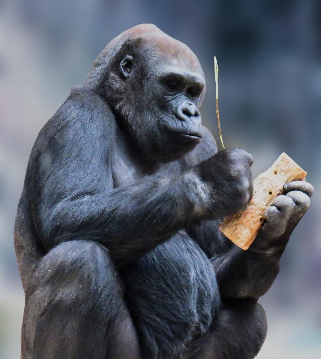 monkey-1334696_1920